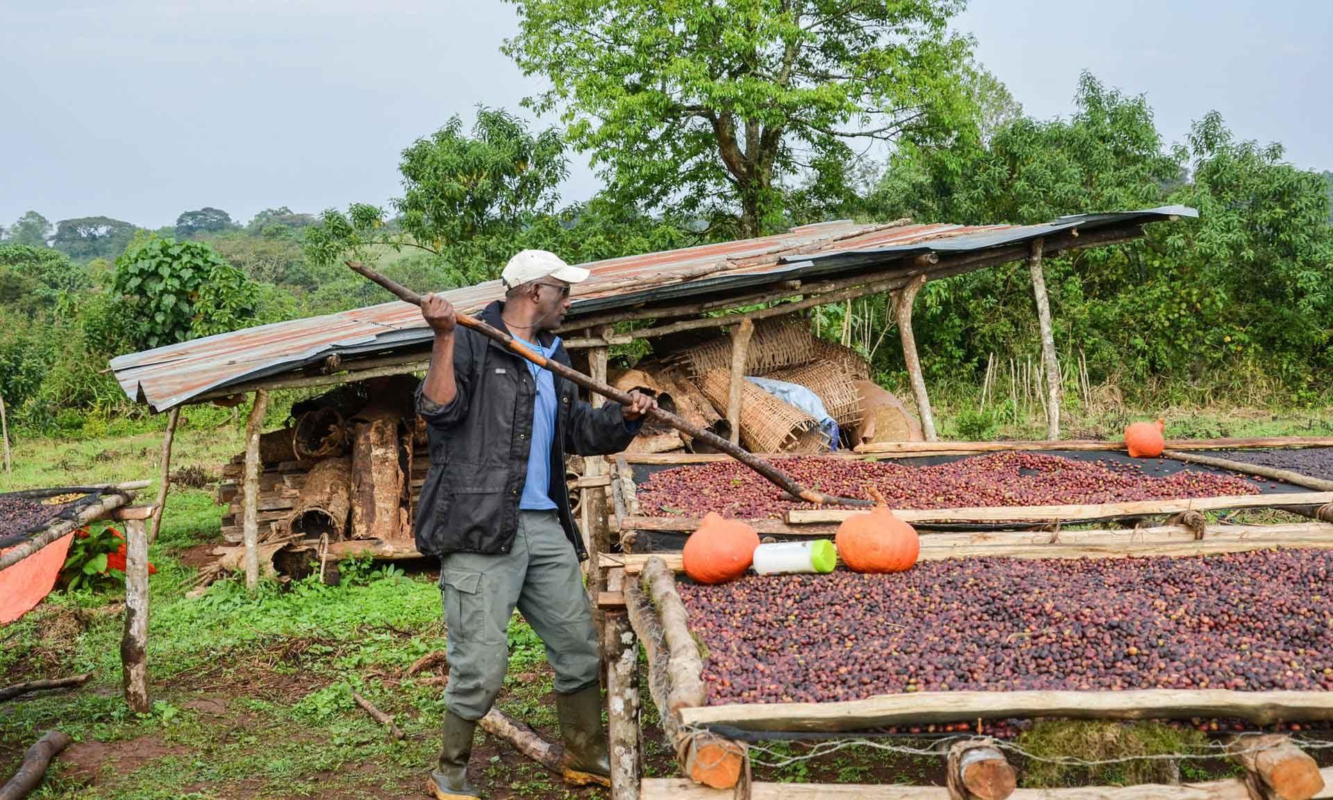 Äthiopien: Mutterland des Kaffees